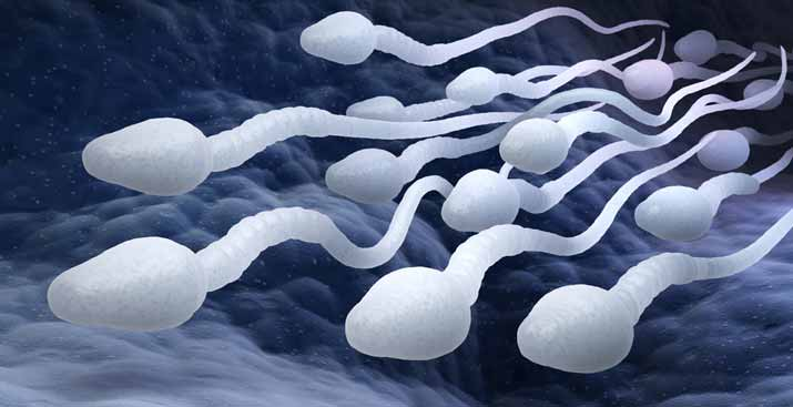 What Things Improve Male Fertility