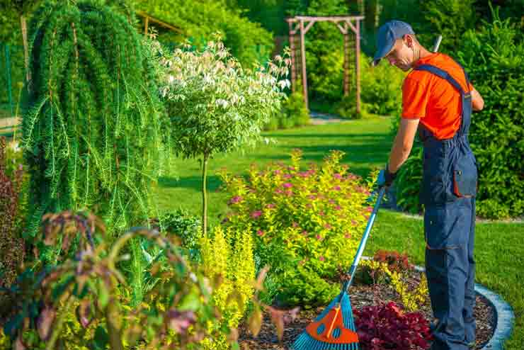 How to Clean up a Garden Full of Weeds