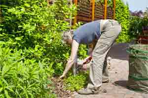 Clean up a Garden