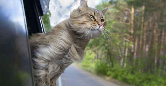 Moving by Car with Your Cat